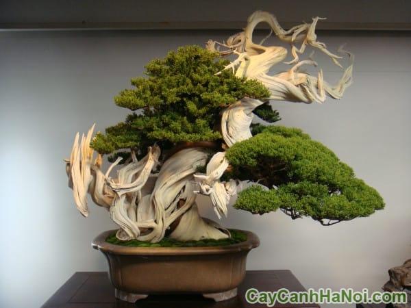 cây xanh cho thuê