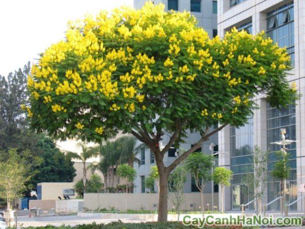 3 loại cây dành riêng cho cảnh quan đô thị