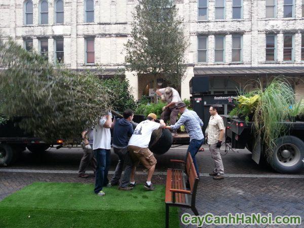bán và cho thuê cây cảnh