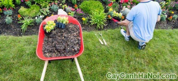 bí quyết chăm sóc cây hoa cảnh