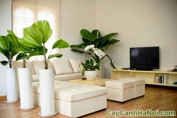 bí quyết chọn cây xanh cho chung cư