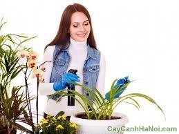 bí quyết hồi sinh cây trồng