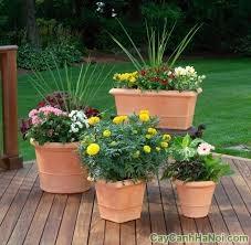 chăm sóc cây trồng trong chậuchăm sóc cây trồng trong chậu