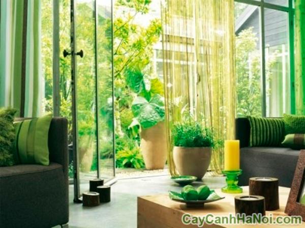 cho thuê cây cảnh nội thấtcho thuê cây cảnh nội thất