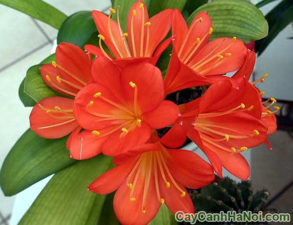 cho thuê hoa cây cảnh