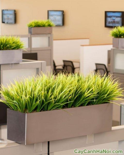 công ty cho thuê cây xanh văn phòng