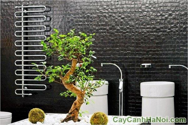 dịch vụ cho thuê cây xanh
