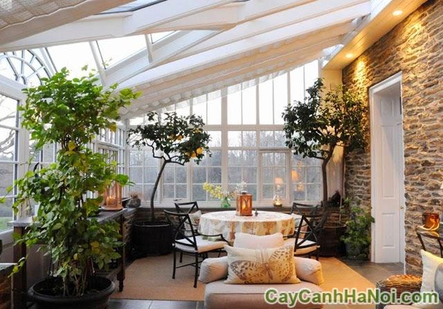 nguyên tắc chọn cây cảnh cho nội thất