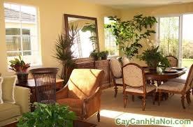 nguyên tắc vàng khi chọn cây cảnh nội thất