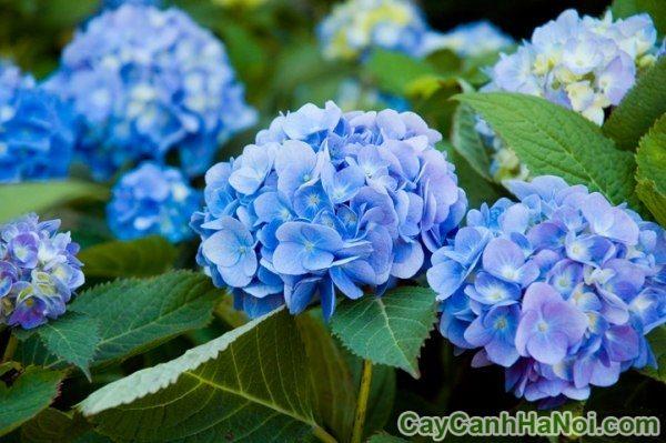 những loài hoa đẹp nhất thế giới