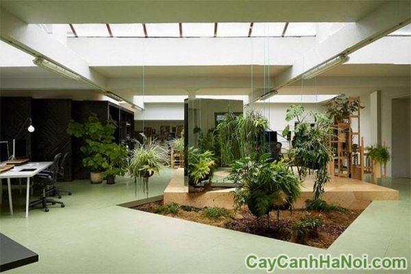 trang trí cây xanh trong nhà